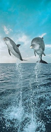 Dolphins - Wall Mural
