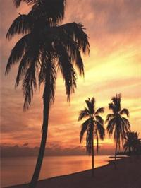 Sunset Palm Walk - Wall Mural