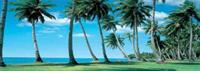 Swaying Palms - Wall Mural