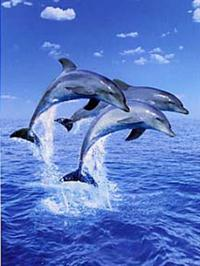 Three Dolphins - Wall Mural