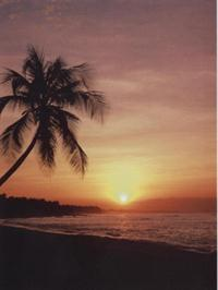 Tropical Sunset - Wall Mural