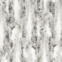 Chinchilla Fur Wallpaper
