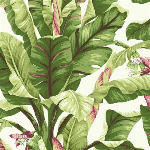 White with Pink Banana Leaf Wallpaper