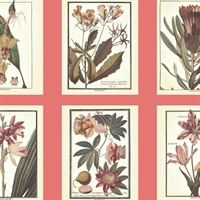 Ashford Toiles Botany Wallpaper