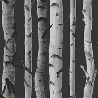 Distinctive Black Birch Tree