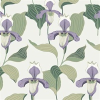Lady Slipper Wallpaper