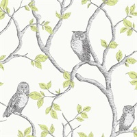 Linden Green Owl Wallpaper