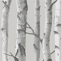 Mountain Birch, Peel and Stick