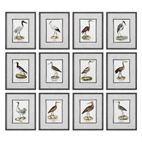 Seashore Birds Prints S/12