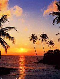 Tropical Sundown - Wall Mural