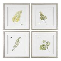 Watercolor Leaf Study Prints S/4