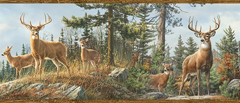 Whitetail Crest Forest